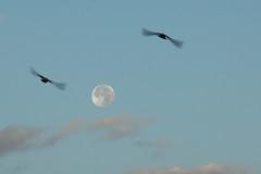"""IMGL3646 (Mahmoud Bakheet """"Hosary"""") Tags: moon"""