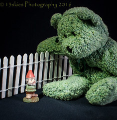 Hey little fellow (HTBT) (13skies) Tags: bear light macro cute green fence gnome small teddybear whitefence htbt teddybeartuesday happyteddybeartuesday
