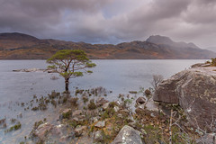 Loch Maree. (Gordie Broon.) Tags: mountain landscape geotagged lago see scotland scenery rocks meer december alba scenic paisaje escocia hills showers lonepine paysage gusty caledonia rainclouds schottland lochmaree slioch gairloch westerross ecosse collines munro colinas scozia scottishhighlands 2015 heuvels scotspine kinlochewe gaidhealtachd hugeln fisherfieldforest gordiebroonphotography canon5dmklll highloch canon1635f4l