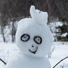 A friendly face in Weaselhead (annkelliott) Tags: winter snow canada calgary face woodland fun snowman eyes outdoor head alberta weaselhead annkelliott anneelliott fz200 fz2003 4february2016