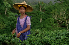Beautiful tea picker in Srimangol,Bangladesh (magbrinik) Tags: india green teagarden bangladesh traditionaldress teaestate traditionalvillage travelphotography adventuretravel teapicker greennature teapickers traveladventure abititradizionali srimangol asiatribes bangladeshtribes