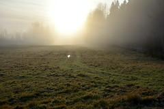 November morning mist (Salmi recreation area, Vihti, 20151129) (RainoL) Tags: november winter mist fog finland geotagged fin uusimaa 2015 nyland salmi vihti vichtis 201511 salmenulkoilualue salmirecreationarea 20151129 geo:lat=6037281928 geo:lon=2449748808