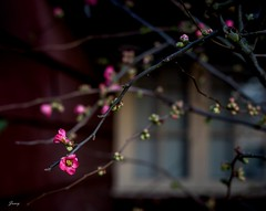 The Window of The Spring (Janey Song) Tags: flowers trees building window spring outdoor canon5dmarkiii zeissplanart1450ze