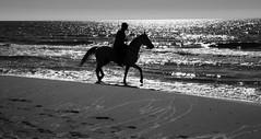 Trotando en las olas de Calblanque (Gabriel Navarro Carretero) Tags: sea blackandwhite horse blancoynegro beach water contraluz caballo mar blackwhite playa jinete cartagena calblanque