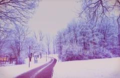 Winterwonderland (meepeachii) Tags: trees bäume iphone morgen morning blue weg frost frozen wonderland winter schnee snow biology biologie university universität germany deutschland regensburg