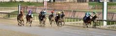 2015-12-31 (36) r4 Kali Francois on #3 Compulsive (JLeeFleenor) Tags: horses caballo cheval photography md photos uma maryland cal jockey jinete cavallo cavalo pferd equestrian kuda alogo equine hest thoroughbreds soos hevonen cuddy paard cavall kon koin laurelpark  jokey fantino hst ceffyl  jquei  ko faras hestur  perd ngi  konj    capall beygir yarraman dokej rennreiter  pfeerd marylandhorseracing marylandracing   okej kilparatsastaja jocheu