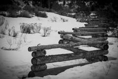 Snowy Ponderosa Fence (HFF!) (Life_After_Death - Shannon Day) Tags: life california winter fiction blackandwhite bw white mountain snow black mountains art history nature monochrome forest canon fence landscape outdoors happy photography eos death mono blackwhite tv day natural outdoor snowy nevada laketahoe sierra shannon chrome national land after tvshow tribe dslr friday canondslr canoneos ponderosa washoe cartwright sierranevadamountains hff lifeafterdeath tahoenationalforest 50d shannonday canoneos50d eosdslr canoneos50ddslr lifeafterdeathstudios lifeafterdeathphotography shannondayphotography shannondaylifeafterdeath lifeafterdeathstudiosartandphotography shannondayartandphotography
