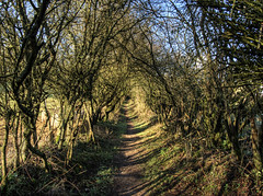 St. Swithin's Walk near Alresford, Hampshire (neilalderney123) Tags: trees landscape path walk tunnel olympus winchester 2016neilhoward