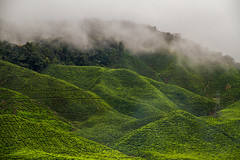 Tea (craighamnett) Tags: mountain green tea malaysia