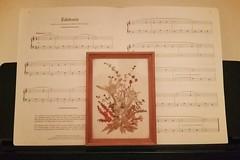 Edelweiss ( EkkyP ) Tags: flowers music alphabet edelweiss pressed eisfor
