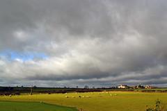 Highfields Sheep (AndyorDij) Tags: uk england sheep unitedkingdom fields rutland hedgerow 2016 empingham highfieldsfarm