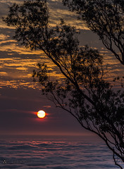 Don't ever let anyone dull your sparkle (SagarSinghPhotography) Tags: morning trees sky sun nature beauty clouds sunrise hope vibrant magical silhuette supershot