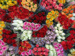 Roses (Jaedde & Sis) Tags: rose many vivid challengeyouwinner 15challengeswinner