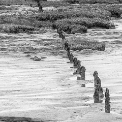 Posts on the beach (andymulhearn) Tags: canon newport rspb eos7d2 sigma150600mmc