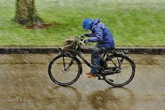 in-weer-en-wind (Don Pedro de Carrion de los Condes !) Tags: sneeuw nat winters fietsen hollands buiten koud asfalt donpedro jongen fietser onderweg sneeuwval trappen tegenwind winterweer d700 naarschool opfiets voortuit ongemaak
