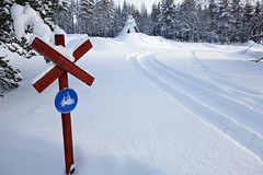 Finland, Scenery and Snowshoes (darrenboyj) Tags: road trees winter white snow cold tree finland landscape scenery crossing scenic x lapland snowmobile snowmobiling