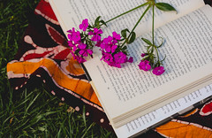 179A0726-1 (den_ise11) Tags: pink flowers white plant flower nature grass reading book spring weeds weed purple pages outdoor books literature blow read wish hindu tapestry openbook
