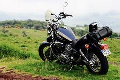 Cow bike (x3401) Tags: yamaha virago xv runion 1100 xv1100