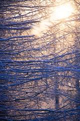 frosty.jpg (tarmoketola) Tags: frosty canonef100400mml eos5dmkii