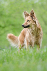 lady in green (mimusha) Tags: dog green nature foxy spring mutt colours canine