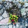 Cuanta vida en el muro (aliciabregovic) Tags: ltytr2 ltytr1