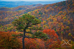 The Colors of Shenandoah NP (Mike Ver Sprill - Milky Way Mike) Tags: park autumn trees sunset panorama orange cloud sun mountain mountains green fall mike beautiful leaves yellow skyline clouds sunrise landscape drive virginia michael amazing nikon colorful seasons outdoor pano hill foliage changing national va mountainside np shenandoah ver d800 foothill 1424 shanandoah sprill versprill