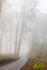 IMG_3450 (ZoRRaW photography) Tags: mist tree fog forest spring luxembourg neuhausgen