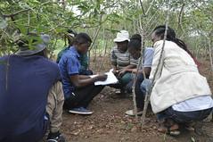 Participants in training session (IITA Image Library) Tags: training workshop breeding nigeria teambuilding cassava ibadan iita manihotesculenta cassavabreedingunit