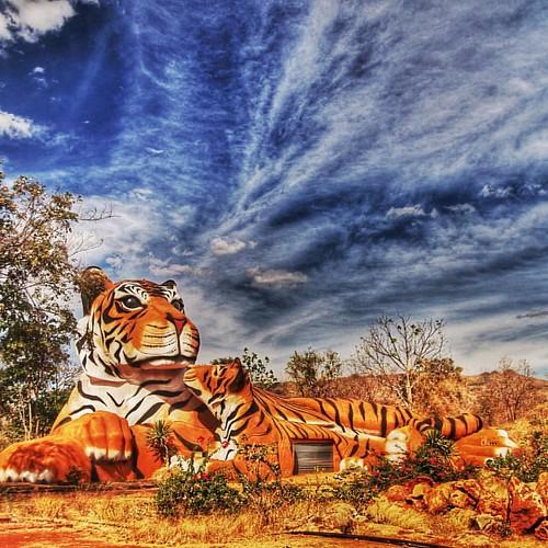 Tiger Temple, Thailand. #bestoftheday #picoftheday #world_union #worldcaptures #city_explore #citybestpics #chiquesnourtemo #greatest_shots #igers #ig_worldclub #revolverphotography #beautifuldestinations #bestintravel #bestvacations  #igersdizquefuiporai