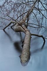 _DSC5002-(3) (Marcin Wytrzyszczewski) Tags: longexposure lake water poland longtime