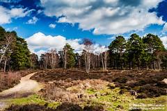 OckComm_DSC5404 (Nick Woods Photography) Tags: trees sky greenleaves green clouds landscape bluesky surrey heath greenery heathland surreyhills ockham ockhamcommon surreyview