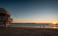Gaviotas de la Caleta (Javier Martinez de la Ossa) Tags: sunset espaa beach faro andaluca agua seagull playa puestadesol cdiz gaviotas ocaso atlntico caleta balneario ocano javiermartinezdelaossa