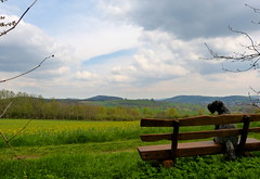 Sonntags-Spaziergangsrast (isajachevalier) Tags: dog wolken bank hund sachsen landschaft haustier tier kerryblueterrier