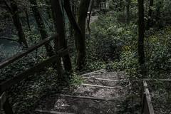 Sentiero (sdrusna79) Tags: scale landscape italia fiume siena sentiero piante elsa paesaggio bosco aperto colledivaldelsa gracciano nikond7100