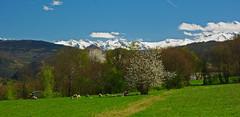 Images d'Ariège (PierreG_09) Tags: saintlizier ariège pyrénées pirineos montagne neige eu