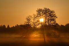 Sonnenaufgang im Mönchbruch