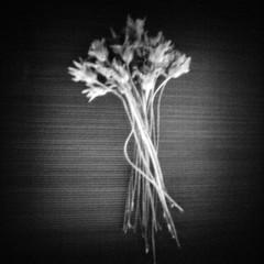 Bouquet (rustman) Tags: blackandwhite bw square iso3200 grain 11 pinhole worldwidepinholephotographyday 22mm gf1 f128 dynamicblackandwhite panasoniclumixgf1 pinwide wanderlustpinwide