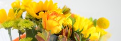 bouquet (rosatifamadelrio) Tags: fave30