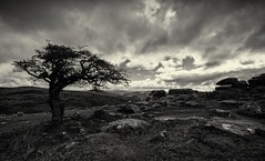 Lone tree at Combestone Tor (Go placidly amidst the noise and haste...) Tags: sky blackandwhite cloud southwest silhouette mono devon tor dartmoor lonetree combestonetor saveearth silverefexpro blackwhitepassionaward