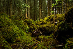 Entrance (Serious Andrew Wright) Tags: wood trees green leaves norway creek moss sticks dirt vegetation stick lichen undergrowth lowly mandalen