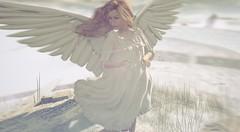 Lil angel Rose. ( sneaky shot ) (Roy Mildor*.  cs*.) Tags: woman art girl angel soft pastel romance romantic brightness roymildor