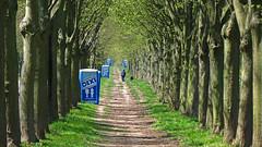 Dixiland (RainerSchuetz) Tags: trees alley alleyway parkway avenue honeybucket walkingthedog lindenavenue schlosswilhelmsthal