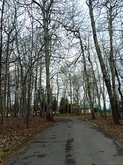 Automny spring  (rayanmust) Tags: park trees white nature leaves spring automn purity yellowleaves talltrees whitetrees