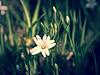 2016-05-02_15-03-01-2 (torstenbehrens) Tags: flower nature bokeh panasonic dmcg1 sigma 1850mm f28 dc mai flora natur on1 on1pic