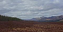 Highland Bling (Bricheno) Tags: snow mountains scotland heather escocia hills szkocja pitlochry schottland clunie scozia cosse  esccia  cluniewalk fonab  bricheno scoia