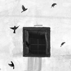 The Dance (mhd.hamwi) Tags: bw bird window birds silhouette nikon middleeast syria damascus sham syrian    dancersinthedark nikond5000 mhdhamwi mohammadhamwi syrianheart