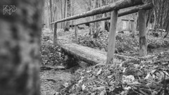 B&W-00725 (alessandro.polla) Tags: bridge blackandwhite bw italy mountains ice nature water river landscape woods iced woodbridge tentino