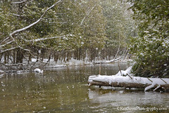 Crystal River ... January snow (Ken Scott) Tags: winter usa snow michigan january lakemichigan greatlakes hdr freshwater voted crystalriver leelanau 2016 45thparallel riverhike sbdnl sleepingbeardunenationallakeshore mostbeautifulplaceinamerica
