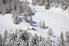 The Lonely Chalets (ptalamy) Tags: travel trees winter white mountain snow alps cold tree nature forest landscape outside daylight cabin day natural natura alpine chalet baita valgerola 500px baite