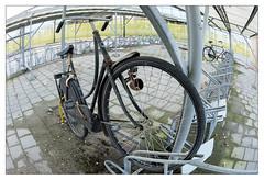 Old and Lonely Dutch bike (leo.roos) Tags: lens prime fl day16 challenge a7 bicyclerack bikerack lenses fietsenstalling bicyclestand fietsenrek omafiets bikeparking focallength bicycleparking primes lenzen dutchbike dyxum darosa brandpuntsafstand hallelujafiets leoroos dayprime sony1628fisheye dayprime2016